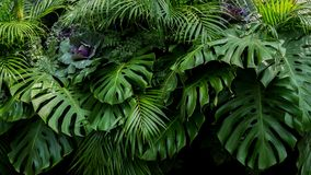 Free Green Tropical Leaves Of Monstera, Fern, And Palm Fronds The Rainforest Foliage Plant Bush Floral Arrangement On Dark Royalty Free Stock Photos - 120653018