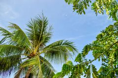 Green tropical leaves of palm with clear sky background stock image