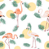 Green tropical leaves pink flamingo sun moon round Royalty Free Stock Images