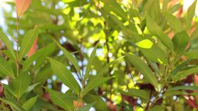 Green tropical leaves. Sunny day on the tropical island of Bali, Indonesia. Asia stock video footage