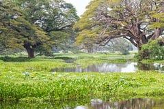Green tropical marshland in Sri Lanka Stock Photos