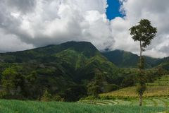 Green tropical mountains and rice terraces stock images
