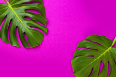 Green tropical palm leaf on pink colored background. Minimal flat lay style. Overhead, top view, copy space. Royalty Free Stock Photography