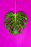 Green tropical palm leaf on pink colored background. Minimal flat lay style. Overhead, top view, copy space. Stock Photo
