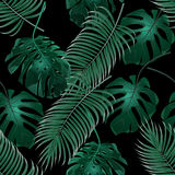 Green tropical palm leaves and monstera. Jungle thickets. Seamless floral pattern. Isolated on a black background. Vector illustration Royalty Free Stock Image