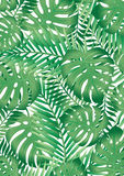Green tropical palm tree leaves background Stock Images