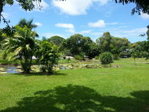Green tropical park Surinam Royalty Free Stock Images
