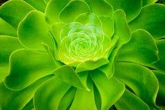 Green tropical plant Stock Photos