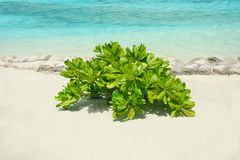 Green tropical plant on sea shore. In sunny day Royalty Free Stock Image