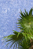 Green tropical plant on a violet wall. Green leaves over a blue-violet wall Stock Image