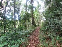 Green tropical rainforest background.  royalty free stock photos