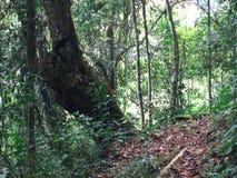Green tropical rainforest background.  stock photos