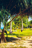 Green Tropical Resort Royalty Free Stock Photography