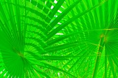 Green tropical sheet Royalty Free Stock Images