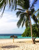 Green tropical trees grow on beach of Cuban resort. Green tropical trees grow on sandy beach of Esmeralda sea in Cuba stock photography