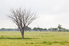 Green Tsavo East Landscape, Kenya Royalty Free Stock Photography