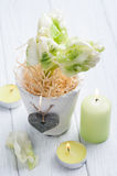 Green tulips, lit candle Stock Photos