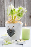 Green tulips, lit candle Royalty Free Stock Images