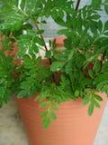 Green tumb. Learning to grow again Royalty Free Stock Photo
