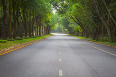 Green tunel forest clean road in the early morning, Thailand Stock Photo