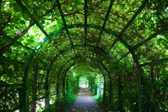 Green tunnel Royalty Free Stock Image