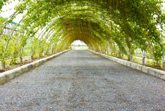 Green tunnel. Made with plants Royalty Free Stock Image