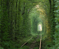 Green tunnel. Natural tunnel of love formed by trees in Ukraine, Klevan Stock Photos