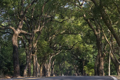 The Green Tunnel. Known as  of Nantou,  is a long avenue in Taiwan.  This is formed from Camphor trees joining together to form a long arch over the road Stock Image