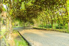 Green Tunnel At Suan Luang RAMA IX Royalty Free Stock Images