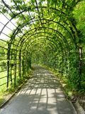 The green tunnel. A beautiful green tunnel created at the Linderhof Castle`s gardens Royalty Free Stock Photography
