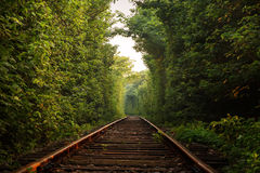 Green Tunnel. Eastphoto, tukuchina, Green Tunnel, Life Style Royalty Free Stock Images
