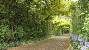 Green tunnel of flowers and plants. stock video