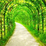 Green tunnel in foliage. Stock Photography