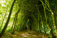 Green tunnel Stock Photos