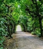 Green tunnel. In garden Royalty Free Stock Photo