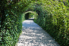 In a green tunnel Royalty Free Stock Image