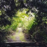 Green Tunnel. A green tunnel on a trail in the rainforest of the pacifix northwest Royalty Free Stock Image