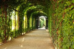 The green tunnel. Or the tunnel of love Royalty Free Stock Photo