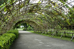 Green tunnel. Made from calabash plant Stock Photography