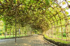 Green tunnel. Made from calabash plant Royalty Free Stock Image