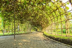 Green tunnel. Made from calabash plant Stock Image