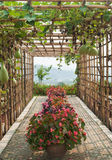 Green tunnel made from calabash plant. At Chiang Mai,Thailand Stock Photo