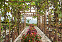 Green tunnel made from calabash plant Stock Photos