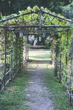 Green tunnel made from plant. In garden Royalty Free Stock Images