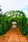Green tunnel made from with plants Royalty Free Stock Images