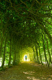 Green tunnel Royalty Free Stock Photos