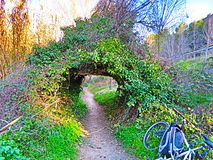 Green tunnel. Green natural tunnel very colorfull Stock Photography