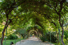 Green tunnel. A park runway surrounded with trees and leaves and metal roof Stock Photo