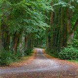Green tunnel. Path surrounded by trees forming a green tunnel Royalty Free Stock Photos