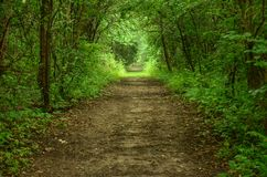 Green Tunnel Pathway. A green tunnel like pathway through Rock Cut State Park in Illinois Stock Image